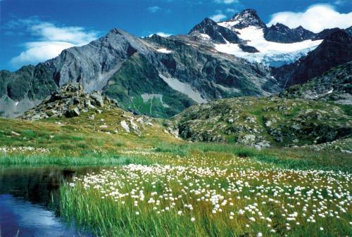 Bergwiese Schweiz
