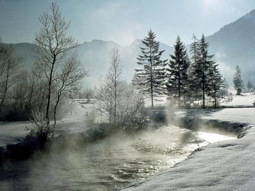 Dr. Bertram Georgii: Ammer im Winter