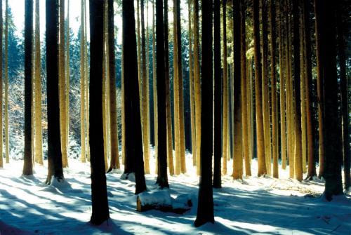 Licht im Winterwald