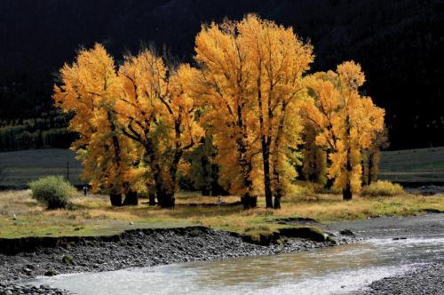 Yellowstone Lamar River