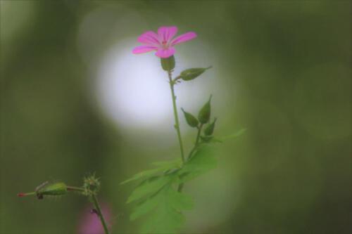 Blumentraum 1