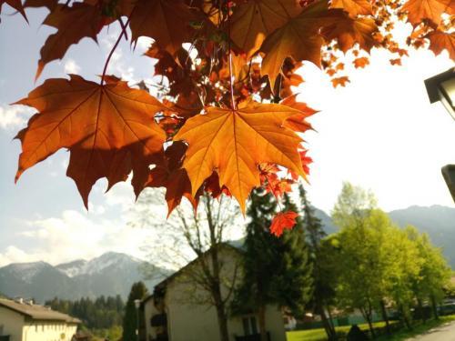 Blick durch den Herbst